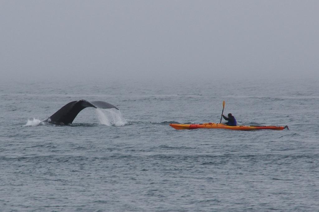 Jeden z mnoha velrybich ocasu nad Michalem