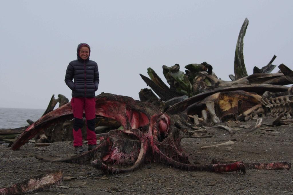 Takhle to vypadá u velrybích ostatků za vesnicí, když na ní zrovna nehodují lední medvědi