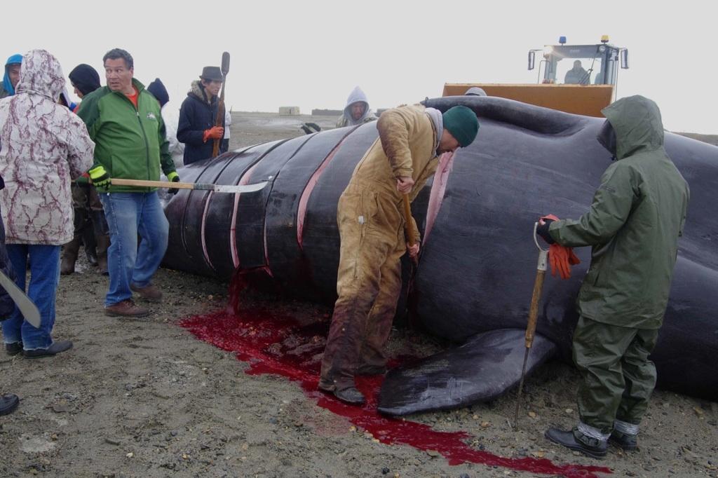 Začíná porcování velryby