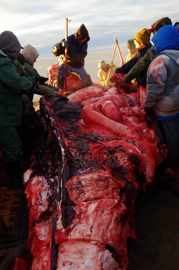 Velrybí střeva jsou pořádné hadice